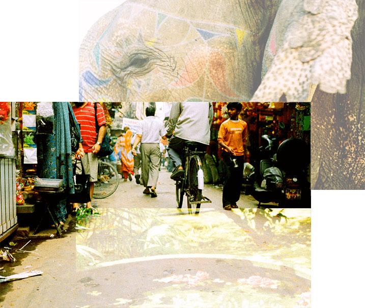 Jaïpur - ville - éléphant
